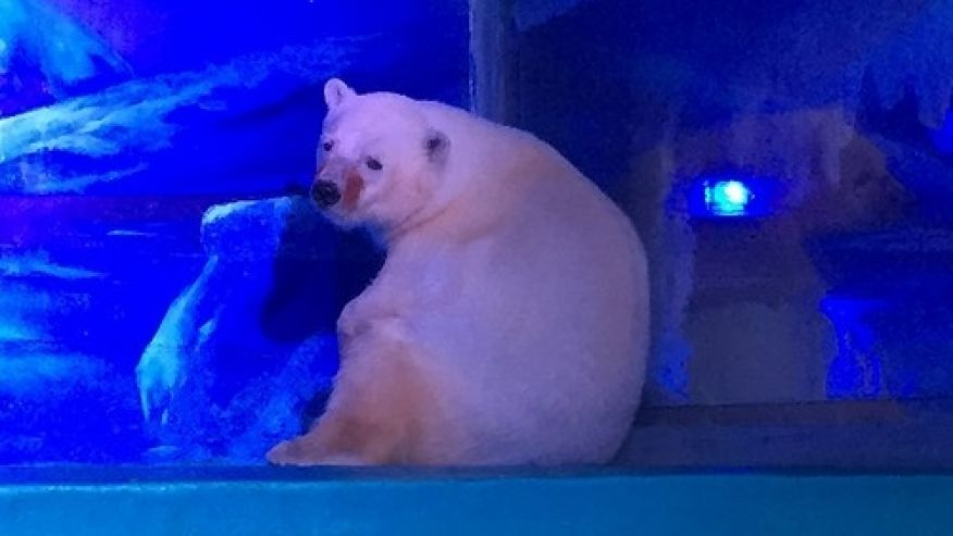 saddest-polar-bear